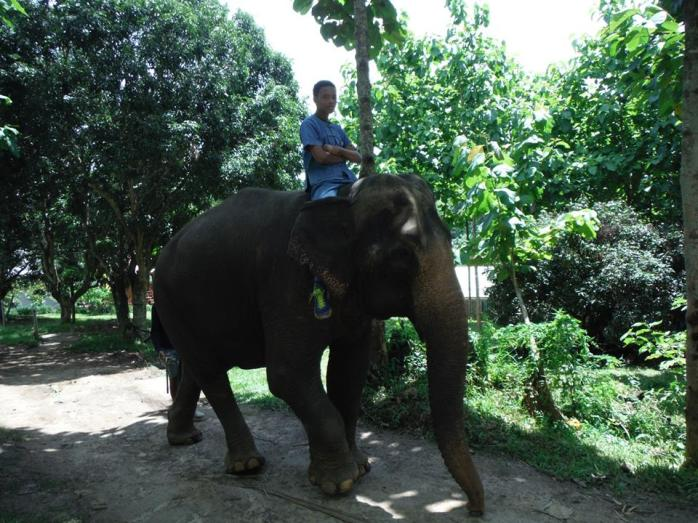 This is how it's done at the Baachang Elephant Park.