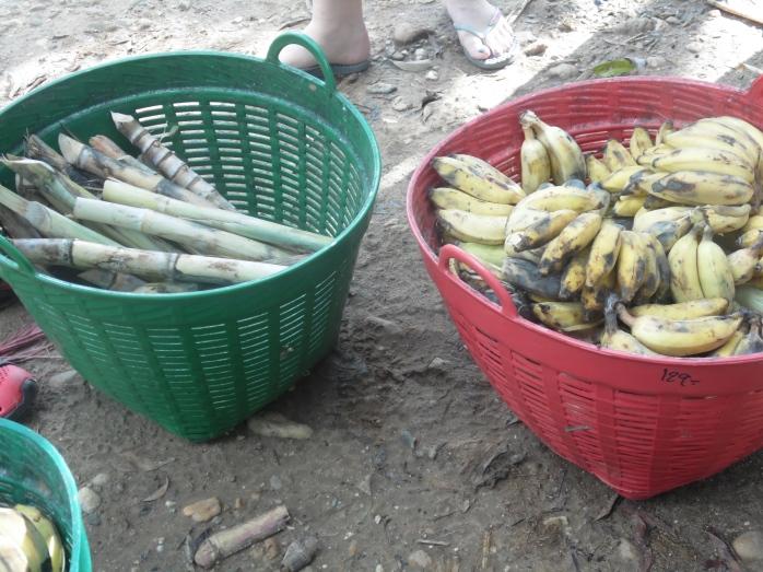 Baskets of sugar cane and bananas.