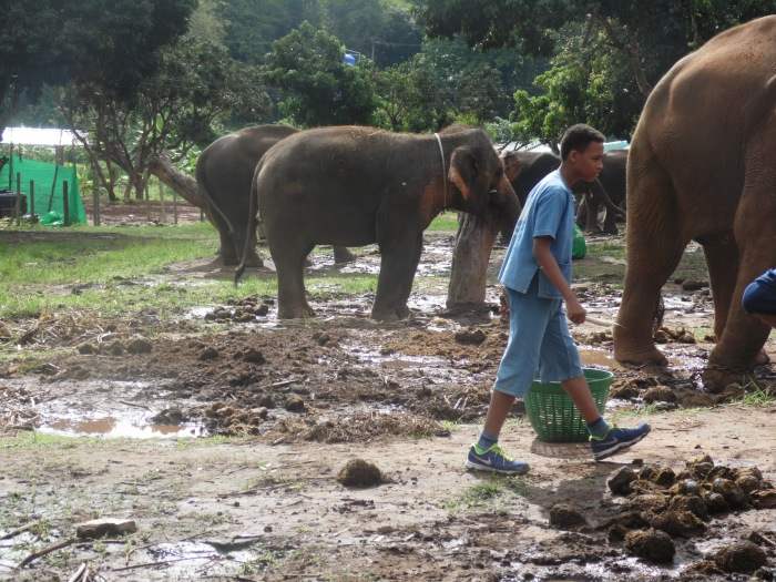 Mud and poo at Baanchang Elephant Park!
