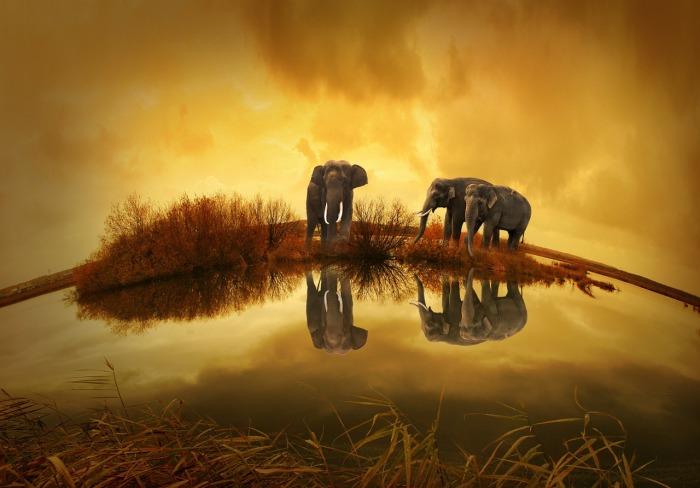 Beautiful elephants in Thailand.