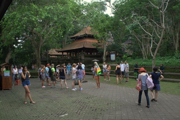 Inside The Monkey Forest.