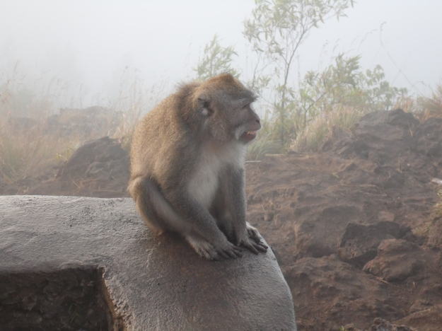 One of the monkeys on top of Mount Batur.