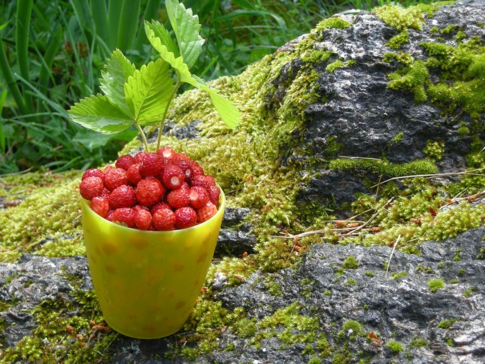 Wild, fresh strawberries fit for a Nordic king!