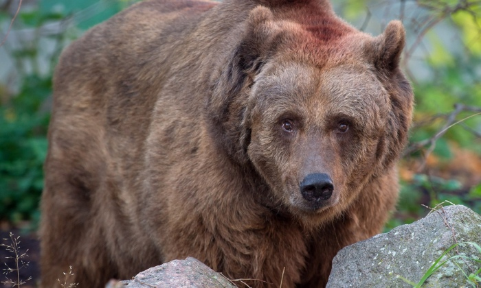 Schnute - the last real-life Berlin bear mascot! ©AFP/Getty