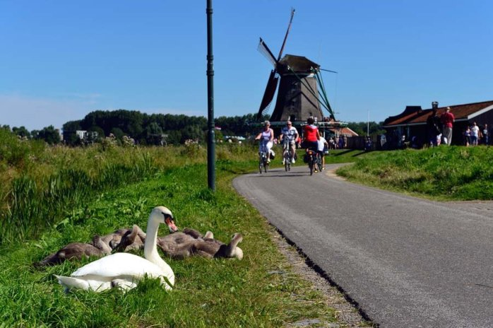 How to visit Amsterdam: Introducing Zaandam - a Dutch traditional town with windmills! @Mike Bink
