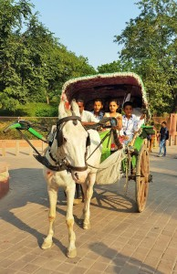 Rent a horse and carriage at the Taj Mahal in Agra, India; horse and carriage; horse and carriage in India; transport in India; Indian transport; horse; carriage; transport; small children; young children; mobility issues; mobikity; mobility in India; Taj Mahal; Agra; India